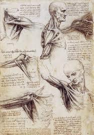 Leonardo Da Vinci Muscles